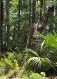 HDR Nieżywy drzewny bagażnik Zdjęcia Royalty Free