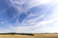 HDR panorama of a wheat field. And dramatic sky Royalty Free Stock Photography