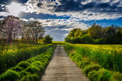HDR path. Spring concrete path in the middle of the day Royalty Free Stock Images