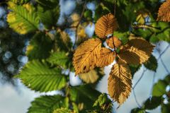 HDR Photo of colored leaves in autumn Royalty Free Stock Image