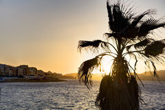 HDR photo of sunset behind sea and a palm tree at Malta, St. Paul Royalty Free Stock Images