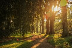 HDR Photo, Sunset in Stromovka park, sun between trees Stock Images