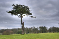 HDR photo of tree in grass field. HDR photo of big old tree in grass field Royalty Free Stock Photos