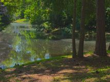 HDR Pond in the forest Stock Images