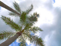 HDR Queen palms against a cloudy sky Royalty Free Stock Photos