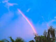 HDR-Regenbogen über den Bäumen 1 Lizenzfreie Stockfotos