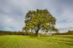 Hdr shoot of a lime tree. On a field in autumn royalty free stock images