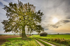 Hdr shoot of a lime tree. Near a road and fields in autumn royalty free stock image