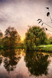 Hdr shoot of a weeping willow Stock Photography