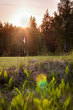 HDR shot of a pin flag at a golf course in Nordic forest landscape Royalty Free Stock Image