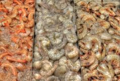 HDR Shrimp. HDR Photo of a pile of shrimp Stock Image