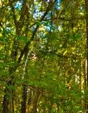 HDR-spindeln på det är rengöringsduken i skogen Arkivfoto