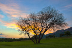 HDR sunset with tree in Magaliesburg area 7 Royalty Free Stock Photo