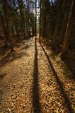 HDR Sussex Trail Long Tree Shadows Leaves Royalty Free Stock Photos