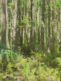 HDR  Thick forest Royalty Free Stock Photography
