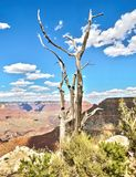 HDR - Three on The Skeleton from the Grand View Point - Grand Canyon, South Rim, Arizona, AZ Stock Images