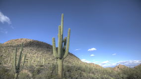 HDR Timelapse Arizona Cactus Stock Photos
