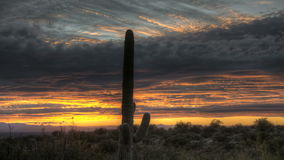 HDR Timelapse Sunset Arizona Cactus Stock Images