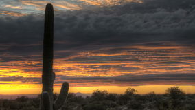 HDR Timelapse Sunset Arizona Cactus Royalty Free Stock Photography