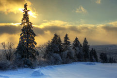 HDR Tree Line Snow Sun Sky Royalty Free Stock Photos