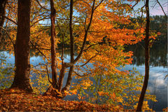 HDR of Trees on a Riverbank. Stock Photo
