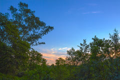 HDR trees at sunset Royalty Free Stock Photos