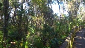 HDR-Weg door John Chestnut Park in Florida stock footage