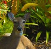 HDR zakończenie w górę jeleniej pościeli zdjęcie royalty free
