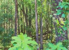 HDR zestrzelał drzewa w lesie Fotografia Stock