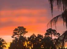 HDR-Zonsondergang over pijnbomen en palmen Royalty-vrije Stock Foto's