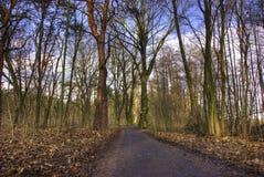 HDRI d'une voie dans la forêt Photographie stock
