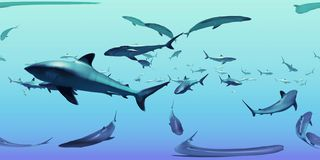 HDRI-Karte, kugelförmiger Umweltpanorama-Naturhintergrund, Gruppe silvertip Haifische, die im Ozean 3d equirectangular IL schwimm vektor abbildung