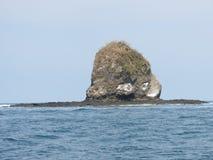 Head ö för apa royaltyfria foton