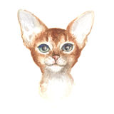 Head of the Abyssinian kitty. Image of a thoroughbred cat. Watercolor painting Stock Images