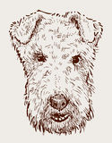 Head of airedale terrier Stock Photography