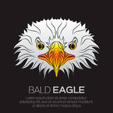 The head of American bald eagle Stock Images