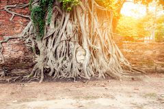 Head of Ancient Buddha in the root Stock Photos