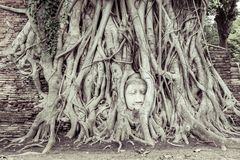 Head of Ancient Buddha in the root Stock Image