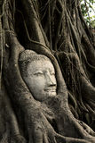Head Ancient Buddha Royalty Free Stock Images