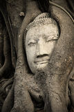 Head Ancient Buddha Royalty Free Stock Photo
