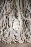 Head of Ancient Buddha Statue in tree roots at Mahathat Temple Royalty Free Stock Images