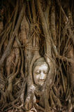 Head of ancient Buddha surrounded by the roots of a tree Royalty Free Stock Photography