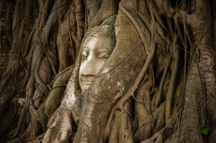 Head of ancient Buddha surrounded by the roots of a tree Stock Images