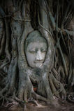 Head of ancient Buddha surrounded by the roots of a tree Stock Image