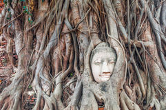 Head of ancient Buddha surrounded by the roots of a tree of Wat Royalty Free Stock Photo