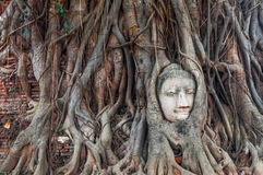 Head of ancient Buddha surrounded by the roots of a tree of Wat Stock Photo