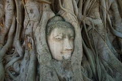The head of an ancient sculpture of Buddha in tree roots. Symbol cities of Ayutthaya, Thailand. The head of an ancient sculpture of Buddha in tree roots. Symbol stock photo