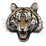 Head of angry tiger hand drawn Stock Photography