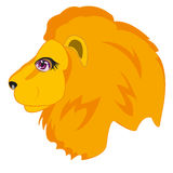 Head animal lion Stock Photography