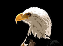 Head of Bald Eagle. Illustration of Head of Bald eagle over a black background Royalty Free Stock Image